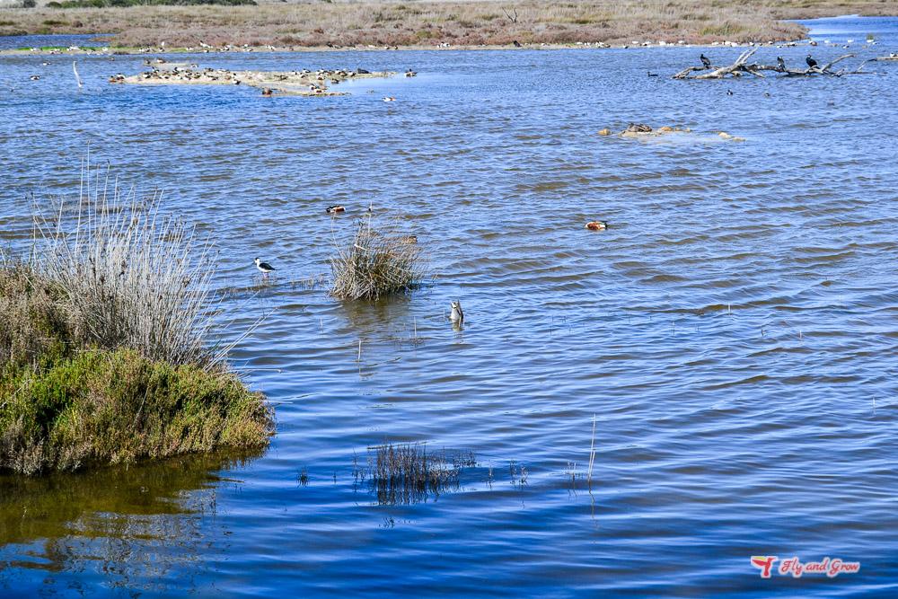Laguna en la albufera de Mallorca