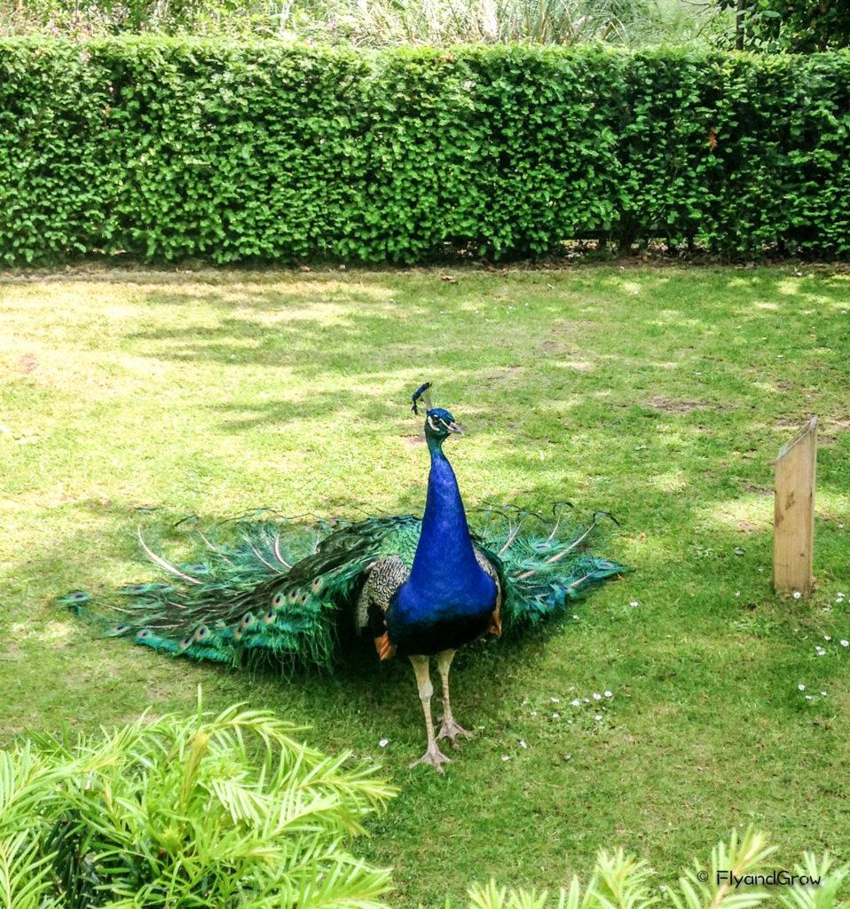 Tokio Gardens en Londres