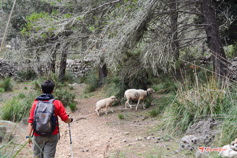 Ruta al Puig de L'Ofre desde Cuber