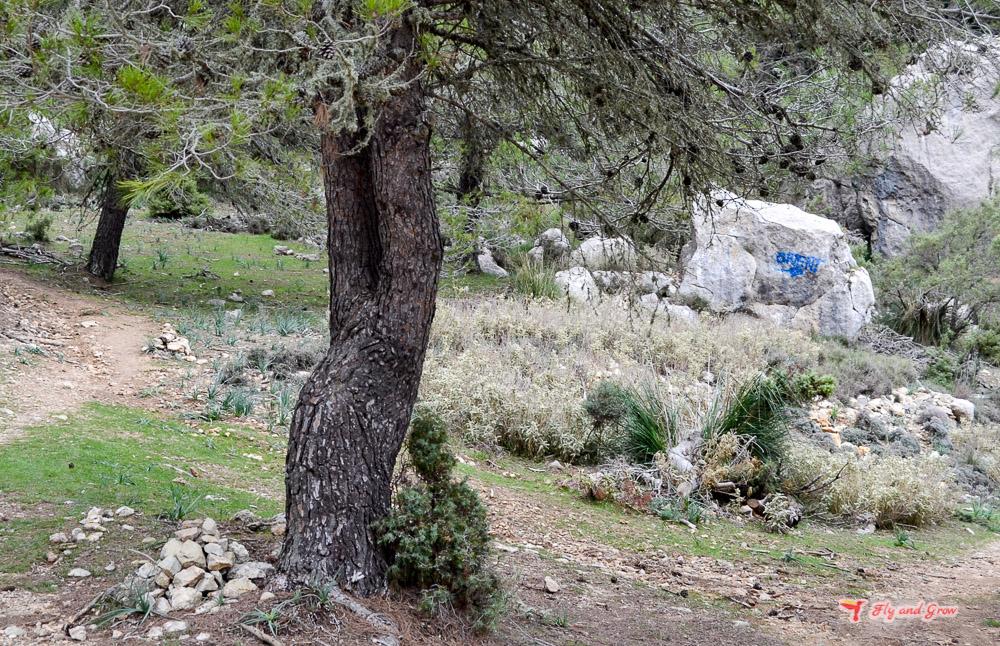 Indicaciones hacia Puig del Ofre desde Cuber
