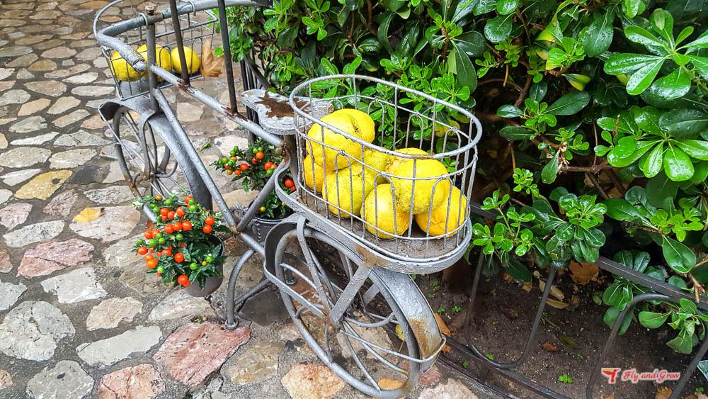 limones de Sóller