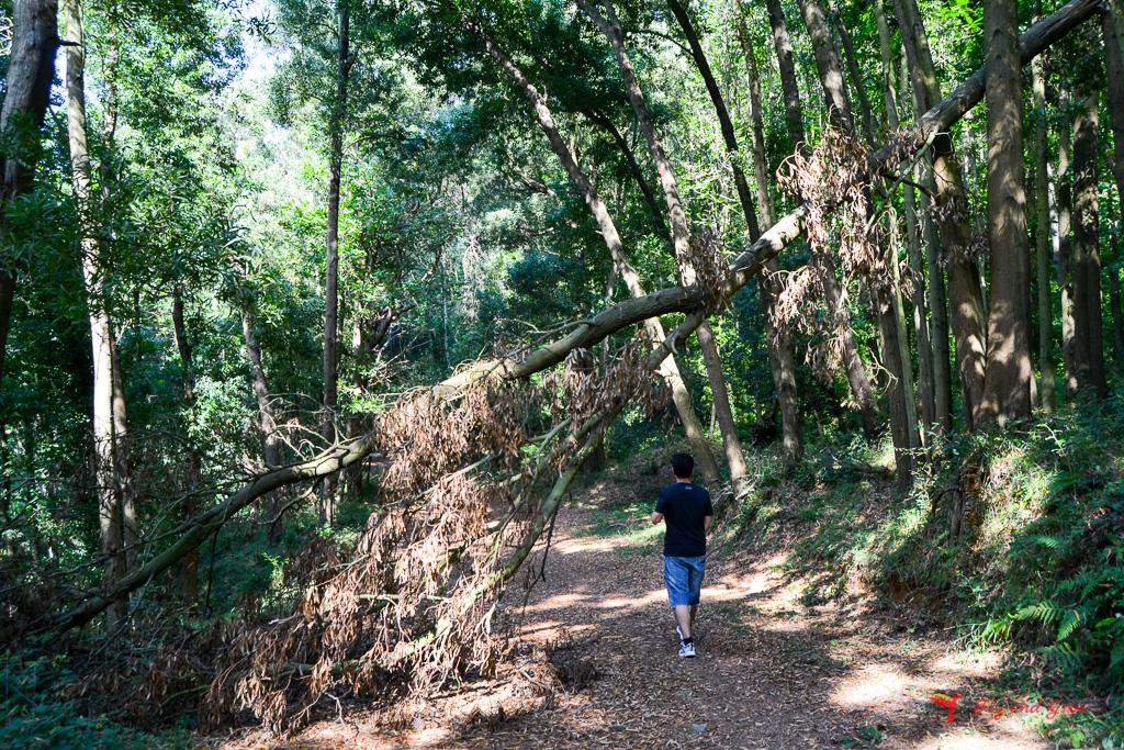 Monte Dinnammare