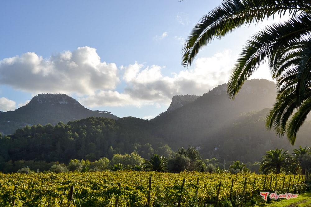 planes primavera Mallorca
